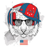 Illustration of tiger in the glasses, headphones and in hip-hop hat with print of USA. Vector illustration. Stock Images
