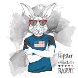 Illustration of tiger hipster dressed up in the glasses and in the t-shirt with print of USA flag. Vector illustration. Stock Image