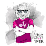 Illustration of tiger hipster dressed up in t-shirt and  in the glasses. Vector illustration. Royalty Free Stock Photo
