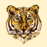 Illustration with tiger. Sketch vector illustration with tiger. Drawing by hand Stock Image