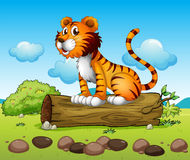 A tiger and the trunk of a tree Royalty Free Stock Photography