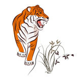 Illustration of tiger and wild orchid. Stock Photography