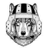 Illustration tirée par la main animale de port animale fraîche de Wolf Dog Wild de sport extrême de casque de rugby pour le tatou Photos stock