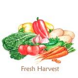 Illustration tirée par la main d'aquarelle des différents légumes de récolte fraîche, d'isolement sur le fond blanc Photo stock