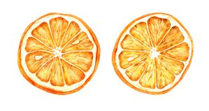 Illustration tirée par la main d'aquarelle des oranges sèches photos stock
