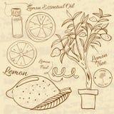 Illustration tirée par la main d'un ensemble de citron web illustration stock