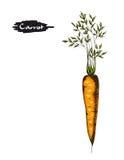 Illustration tirée par la main de carotte photographie stock libre de droits