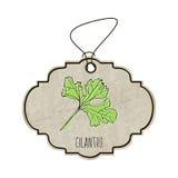 Illustration tirée par la main de la collection d'épices et d'herbes Le vieux label dans le rétro style avec le cilantro parfumé  illustration de vecteur