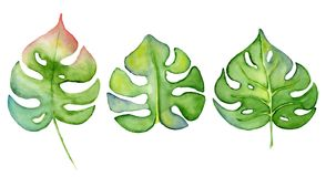 Illustration tirée par la main de monstera de feuille de plante tropicale verte d'aquarelle d'isolement sur le fond blanc image libre de droits