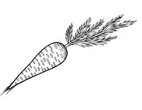 Illustration tirée par la main de page de coloration de carotte illustration stock