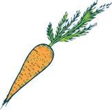 Illustration tirée par la main de page de coloration de carotte pour l'adulte et l'enfant illustration libre de droits