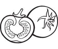 Illustration tirée par la main de page de coloration de tomate illustration libre de droits