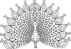 Illustration tirée par la main de paon de griffonnage illustration stock
