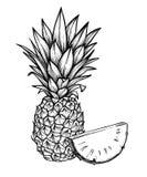 Illustration tirée par la main de vecteur - ananas Frui tropical exotique Images libres de droits