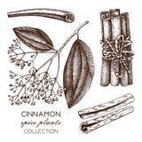 Illustration tirée par la main de vecteur de casse sur le fond blanc Croquis d'épice de cuisine Dessin d'écorce de cannelle de cr illustration de vecteur