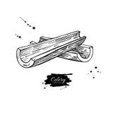 Illustration tirée par la main de vecteur de bâton de céleri Objet d'isolement de style gravé par légume Dessin végétarien détail Photo libre de droits