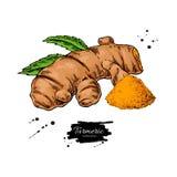 Illustration tirée par la main de vecteur de racine de safran des indes Safran des Indes et poudre illustration libre de droits