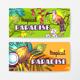 Illustration tirée par la main de vecteur tropical Photo stock