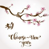 Illustration to Chinese New Year. Greeting postcard, poster, or banner design to Chinese New Year. Branch of sakura withlettering text on white background Stock Photography