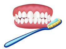 Illustration of tooth model and toothbrush. With toothpaste Stock Images