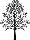 Illustration of tree. Black silhouette vector illustration