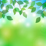 Illustration of tree branches in sunny day Stock Photo