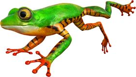 Tree Frog Jump, Jumping, Isolated, Wildlife. Illustration of a tree frog jumping through the air. The amphibian is in mid jump as he jumps in this isolated image stock illustration