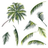 Illustration of a tree and palm tree branches Royalty Free Stock Image
