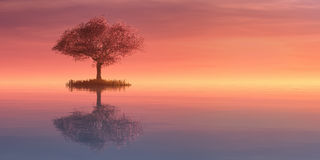 Illustration of a tree and sunset. 3d illustration of a tree and sunset Stock Photo