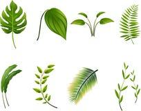 Tropical Leavesillustration royalty free illustration