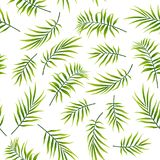 Tropical palm leaves seamless pattern on a white background. Illustration of Tropical palm leaves seamless pattern on a white background Royalty Free Stock Photos