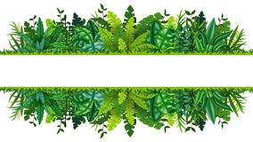 Illustration of a tropical rainforest banner Royalty Free Stock Images