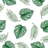 Tropical seamless pattern with palm leaf and monstera leaf, hand drawn tropical illustration for backgrounds, fabric or wrapping