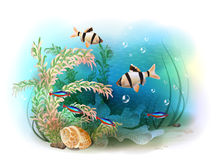 Illustration of the tropical underwater world. Royalty Free Stock Photos
