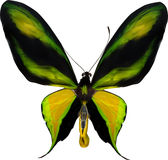 Illustration with tropical yellow and green butterfly Stock Photography