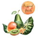Illustration tropicale d'aquarelle avec des fruits et des plantes sur un fond blanc illustration stock