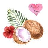 Illustration tropicale d'aquarelle avec la noix de coco et palmette sur le fond blanc illustration de vecteur