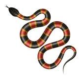 Illustration tropicale de vecteur de serpent Photo libre de droits