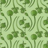 Illustration twine plant. Seamless pattern. Royalty Free Stock Photography