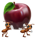 Ants carrying a big apple Stock Image