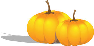 Illustration of two beautiful pumpkins. Vector Royalty Free Stock Photo