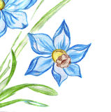 Illustration of two blue flowers with green leaves of daffodils Royalty Free Stock Photo