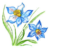 Illustration of two blue flowers with green leaves of daffodils Stock Image