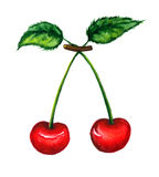 Illustration of two cherries Stock Photography