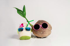 Illustration of two coconuts talking to each other on a white background. Stock Photos
