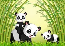 Two cute panda in a bamboo forest royalty free illustration