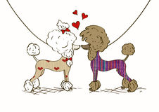 Illustration of two lovers Poodle dogs. Cartoon illustration of two lovers Poodle dogs dressed in knitted clothes Royalty Free Stock Photo