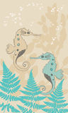 Two Seahorses Royalty Free Stock Images