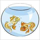 Illustration of two stylized Golden fish in aquarium Stock Photos