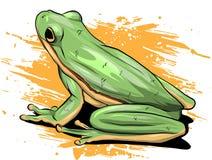Grenouille verte clip art de vecteur illustration de vecteur illustration du enfants vert - Dessin de grenouille verte ...